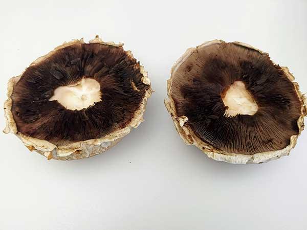 two portobello mushroom caps with stems removed.